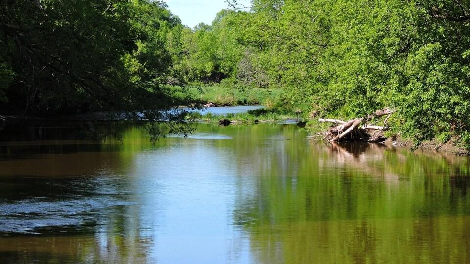 On voit les eaux de la rivière, l'été. Des arbres et arbustes bordent le cours d'eau.