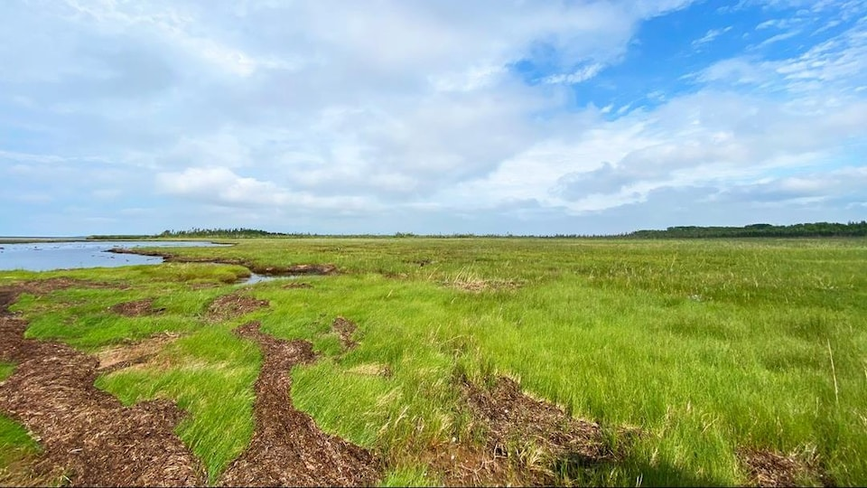 Les marais salés dans la région de North Enmore.