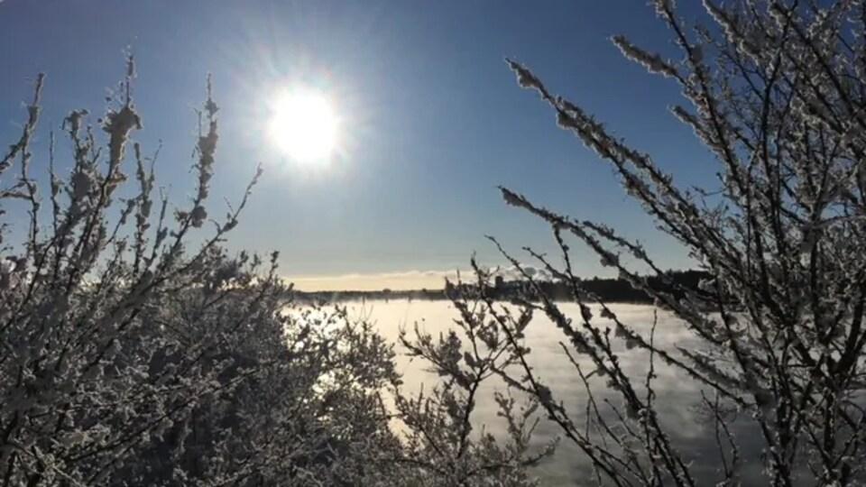 Soleil sur la rivière Saskatchewan en plein hiver avec les arbres recouverts de neige.