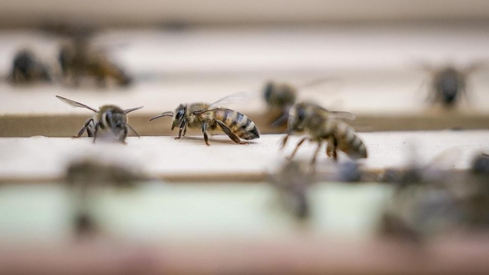 Gros plan sur une abeille posée sur le dessus d'une ruche.
