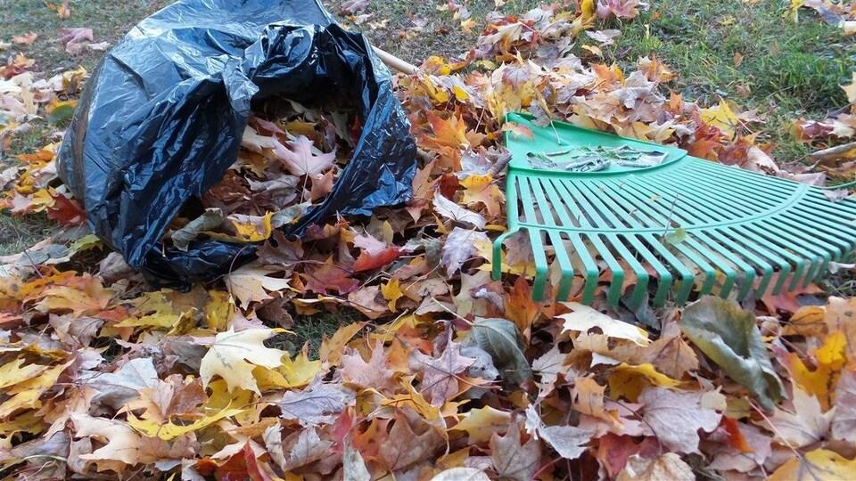 Sac de poubelle et râteau à l'automne.