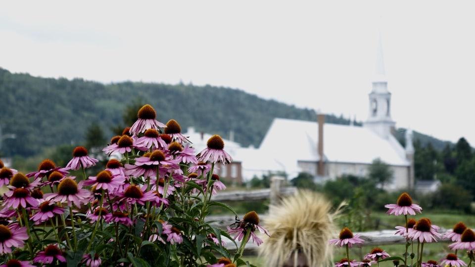 Des fleurs d'ecchinacée avec une église en arrière-plan