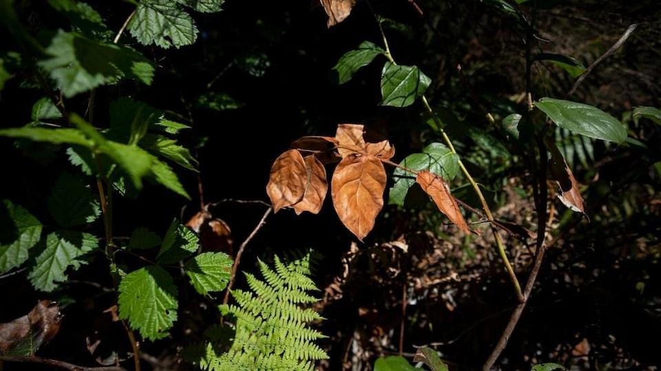 Une branche avec des feuilles brunes entourée de plantes vertes.