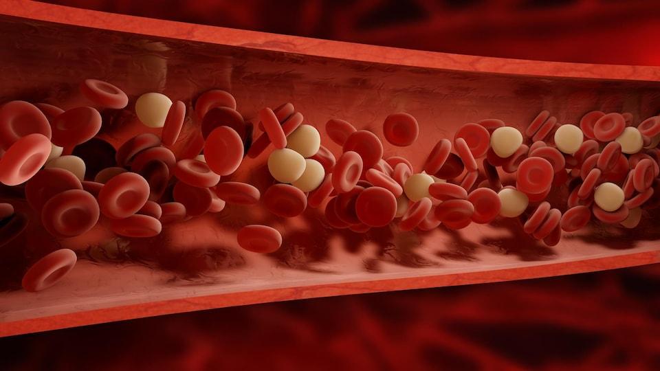 Représentation artistique de la circulation sanguine.