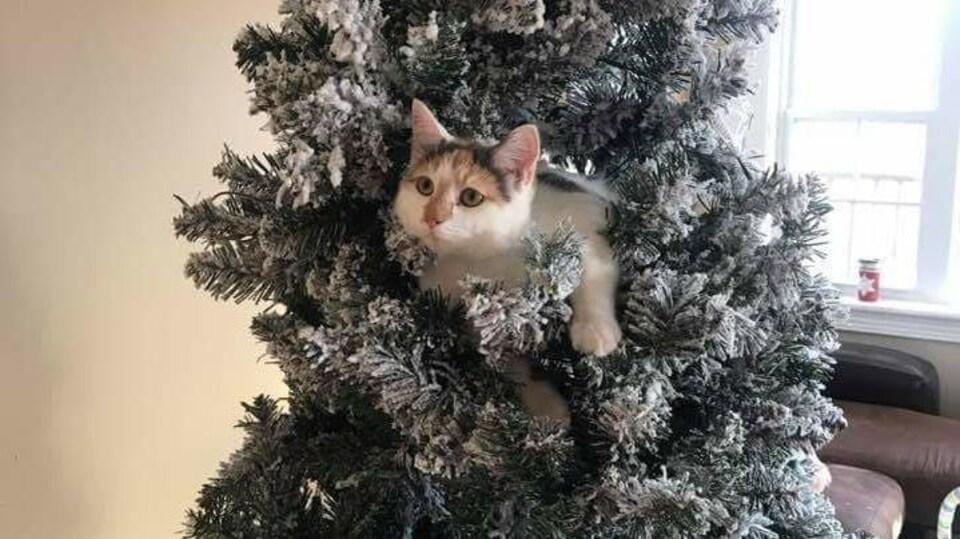 Une petite chatte au milieu d'un sapin de Noël