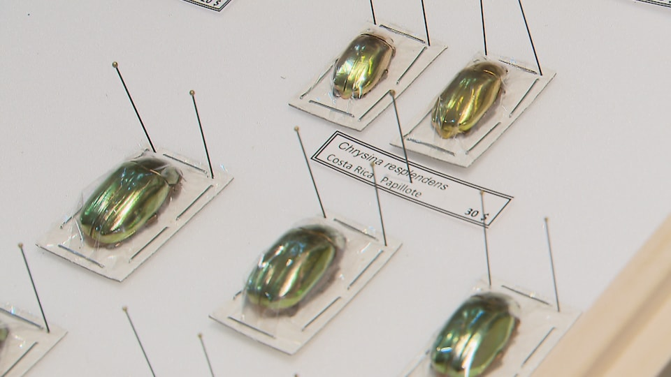 Des scarabées d'or.