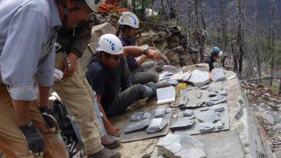 Des chercheurs étudient des fossiles sur le site d'une carrière.