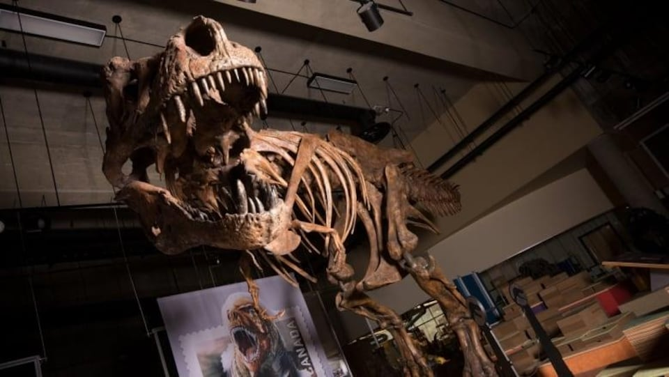 Squelette de Scotty, debout avec son impressionnante mâchoire.