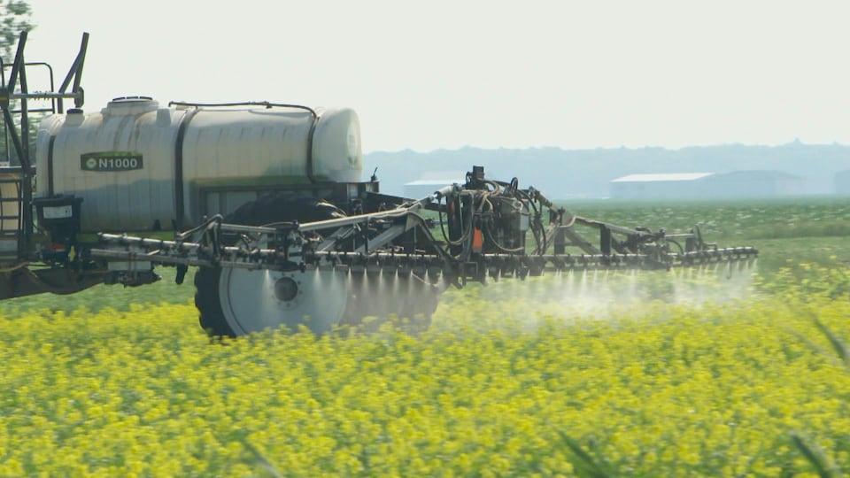 Pulvérisation d'herbicide dans un champs de plantes de couverture.