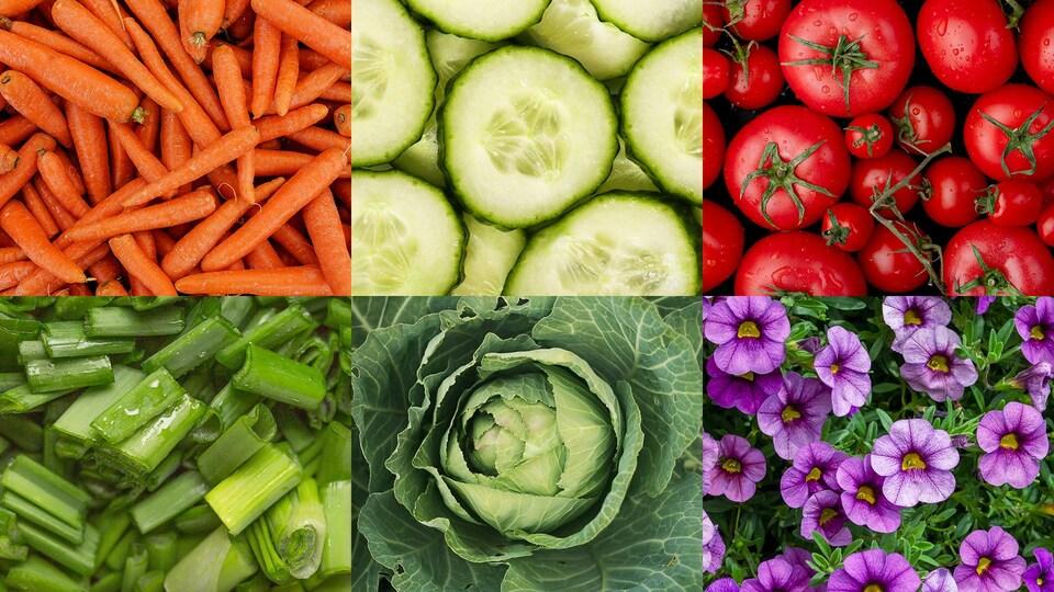 Certaines semences partent plus vite que d'autres. Voici la liste : carottes, concombres, tomates, échalotes, choux, plantes annuelles ou vivaces.