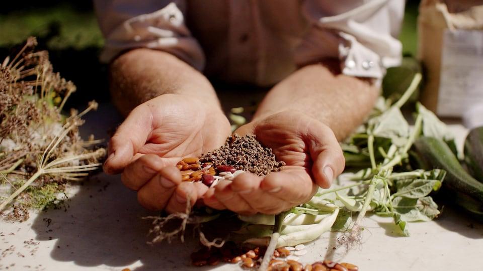 Trois différentes semences dans les mains d'un fermier.