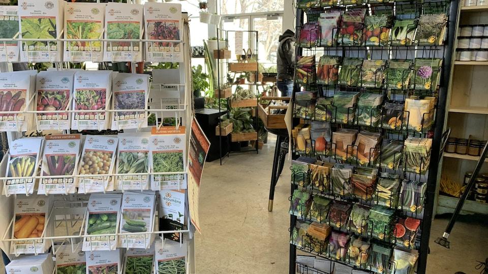 Des étalages de semis dans un commerce.