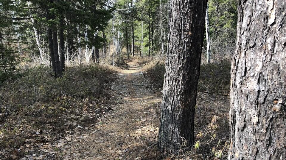 Un sentier se faufile à travers les arbres au printemps.