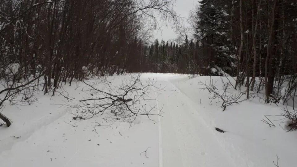 Des branches bloquent un sentier de motoneige en forêt.