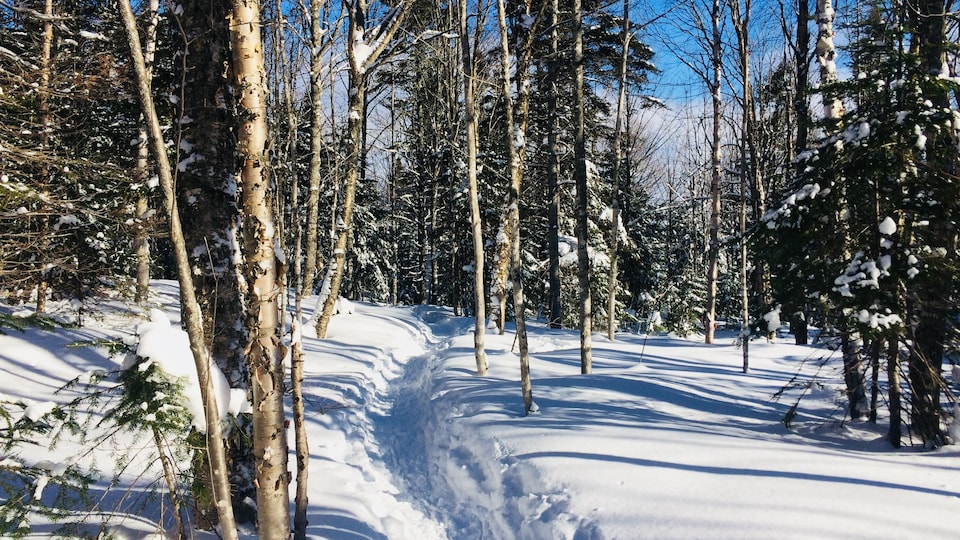 Un sentier dans une forêt enneigée.
