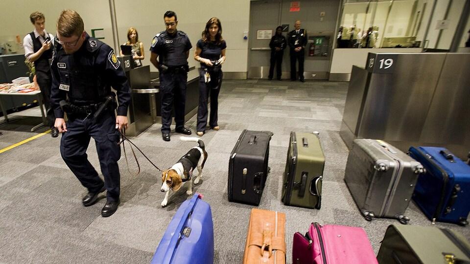 Un agent des services frontaliers et un chien renifleur marchent près de valises de voyageurs placées en rangées à l'aéroport Pearson de Toronto.
