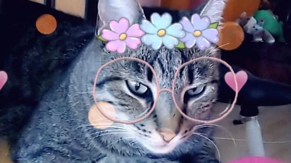 Une photo d'un chat décorée de lunettes roses et d'une couronne de fleurs. Des coeurs roses flottent autour du chat.