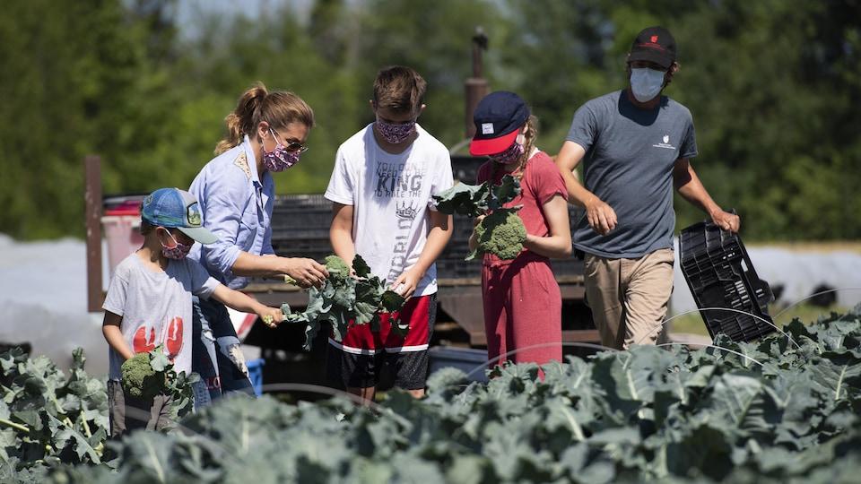 Sophie Grégoire-Trudeau et ses enfants, munis de masques, travaillent debout dans un champ.