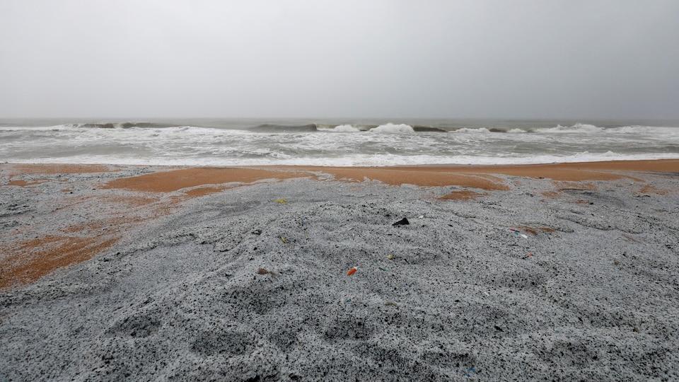 Des granules de plastique s'amoncellent sur la plage au Sri Lanka.