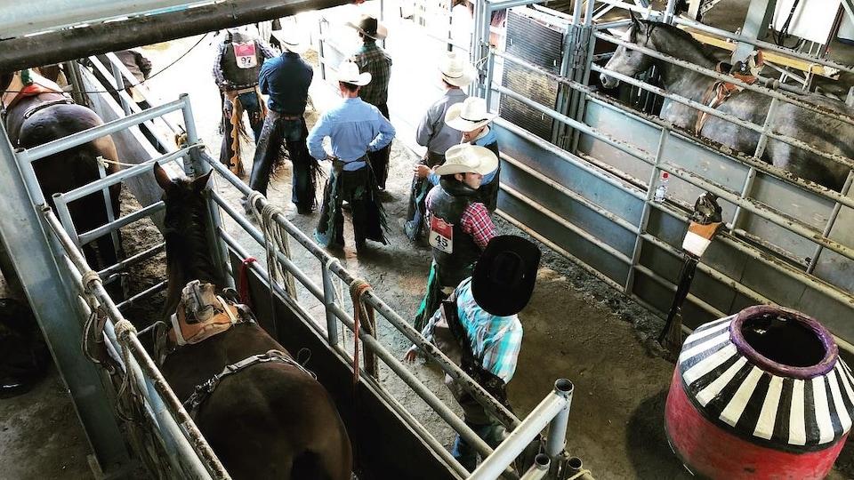 Des cowboys attendent en coulisses près des chevaux de rodéo.