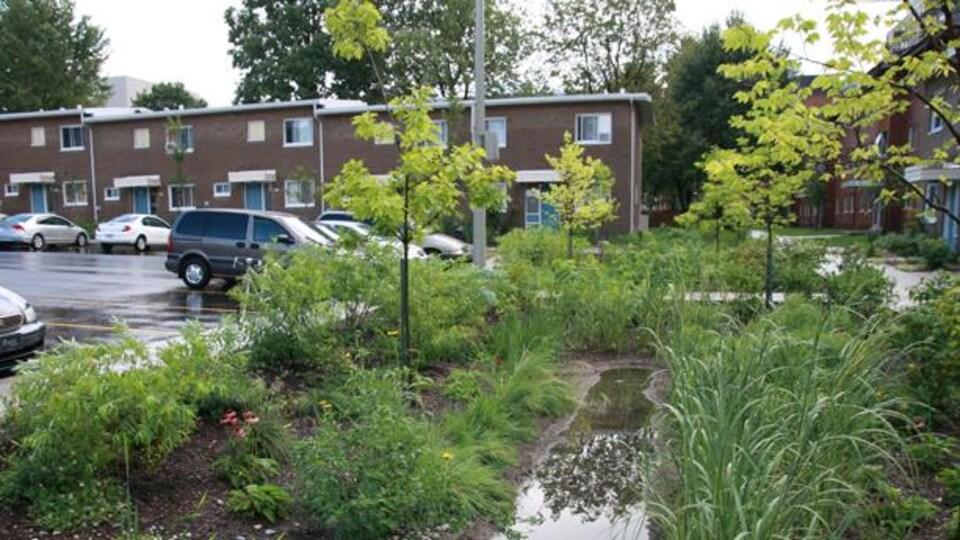 De l'eau s'est accumulé près d'un drain sur une bande de végétation en bordure de stationnement.