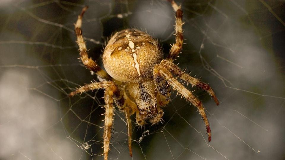 Une araignée dans sa toile.