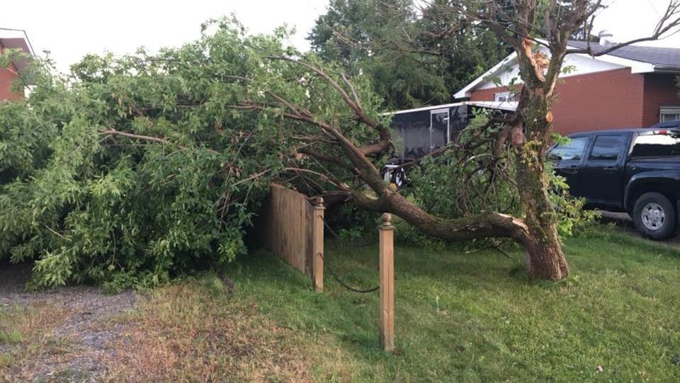 Une branche d'arbre tombé sur la clôture d'une résidence.