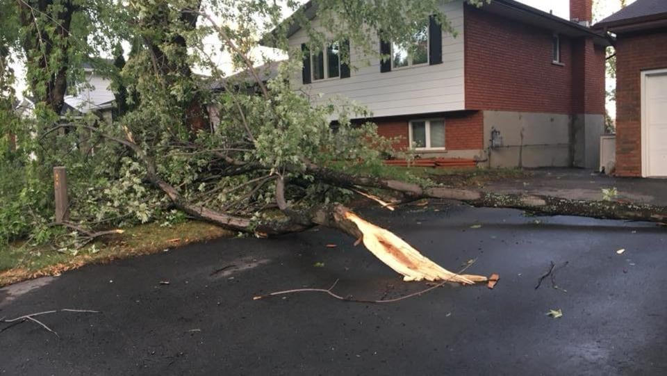 Un arbre déraciné devant un résidence.