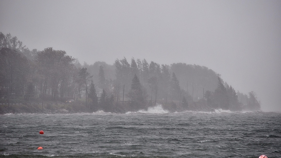Du vent fait plier les arbres sur le bord de l'eau.