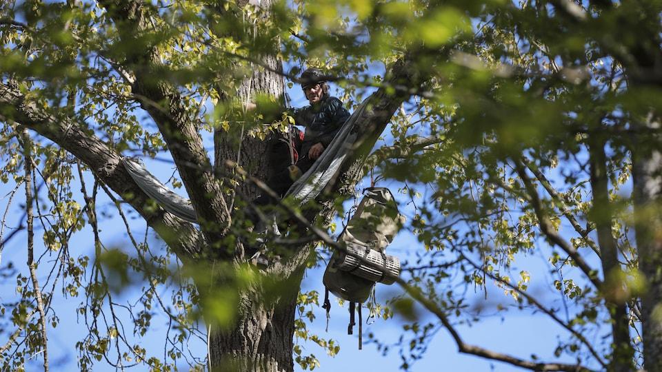 Un homme perché dans un arbre.