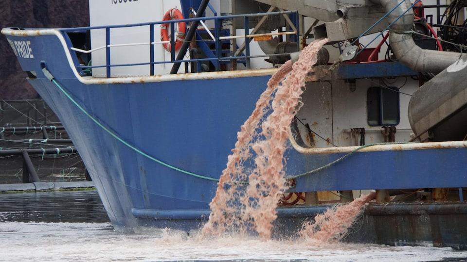 Un liquide rose jaillit d'un bateau.