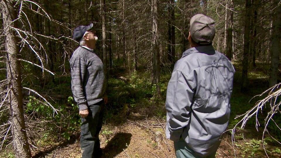 Deux hommes qui regardent les arbres autour d'eux