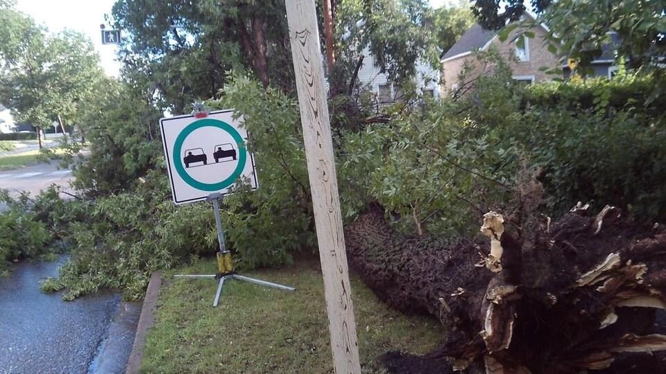 Un arbre déraciné au sol.