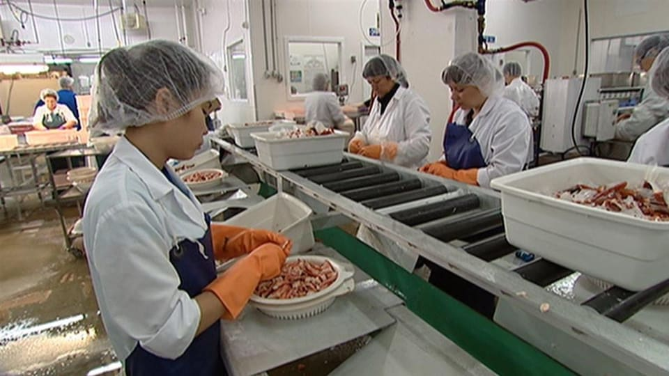 Les employées, vêtues d'un tablier et d'un bonnet, dépècent des pinces de crabes.