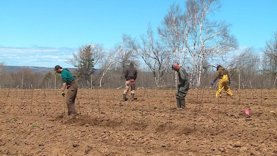 Quatre hommes à au moins deux mètres de distance les uns des autres dans un champ.