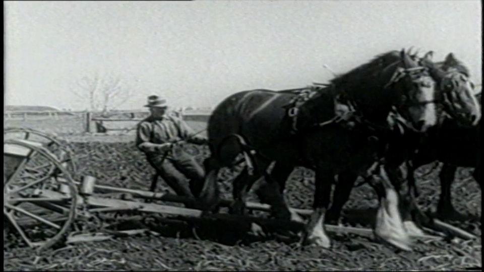 Vieille photo en noir et blanc d'un fermier qui tient les rênes de deux chevaux de trait.