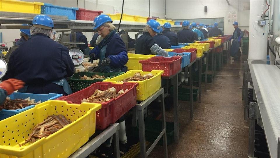 Tri du crabe à l'usine Unipêche MDM de Paspébiac
