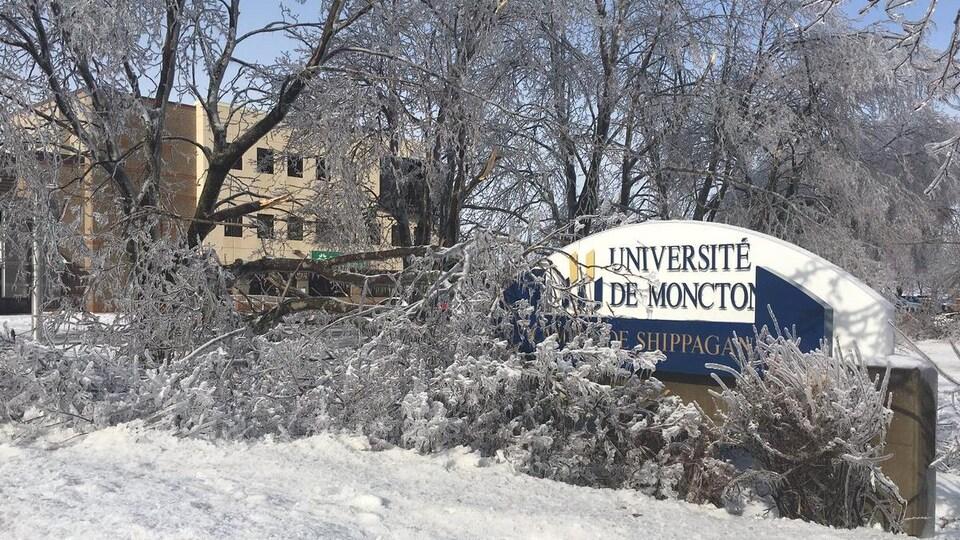Des arbres dans le campus ploient sous le poids du verglas.