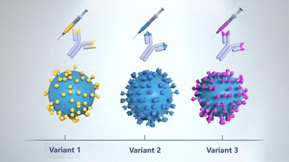 Représentation graphique de la protéine S sur des variants du coronavirus.