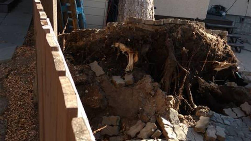 Un arbre déraciné est tombé sur le toit de la structure d'une maison à Regina.