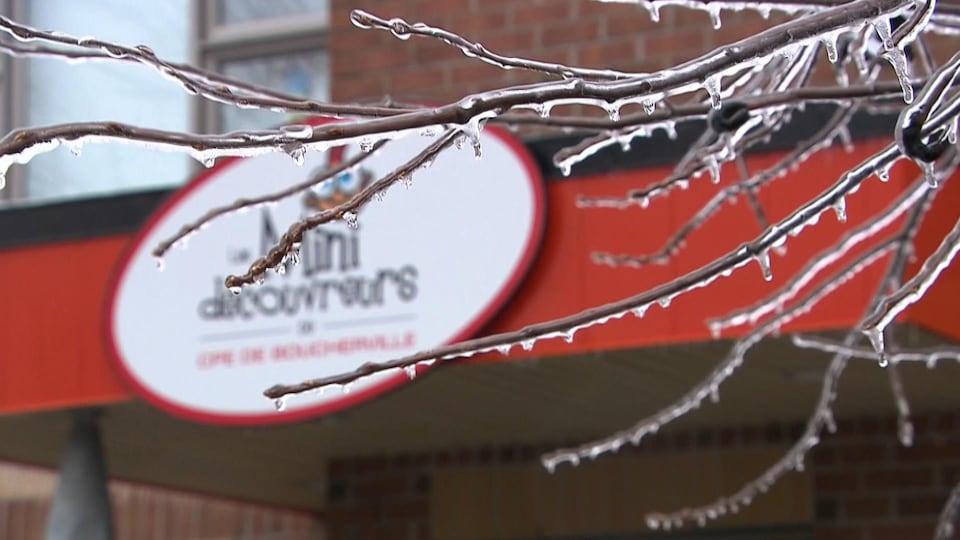 Des arbres et branches ont cédé sous le poids du verglas dans plusieurs régions du Grand Montréal.