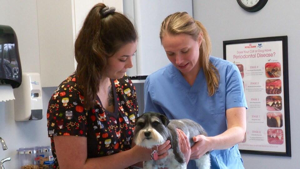 Une vétérinaire et une technicienne en santé animale soignent un chien.