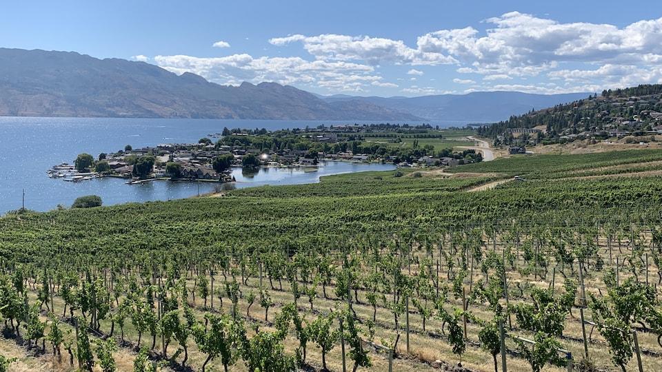 Un vignoble dans la vallée de l'Okanagan, en Colombie-Britannique.