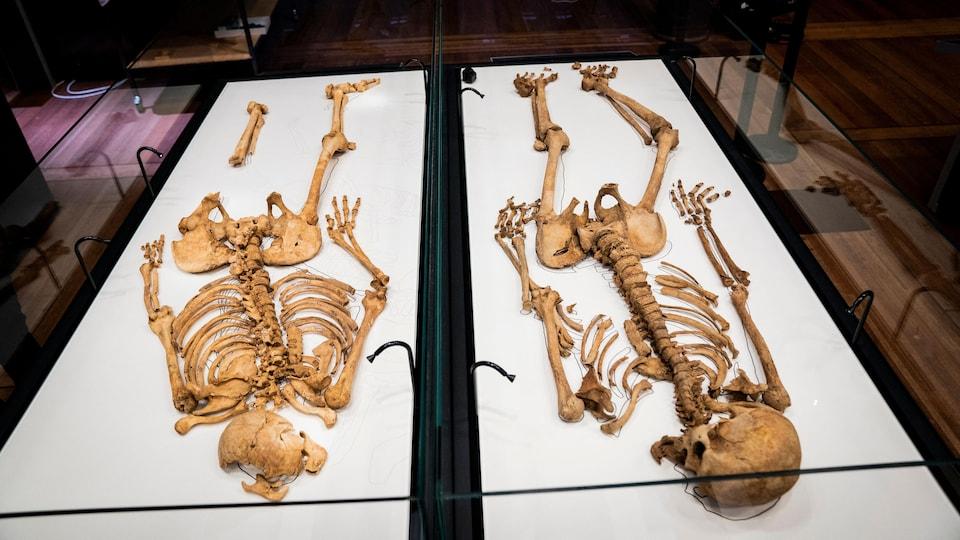 Deux squelettes de guerriers vikings au Musée national du Danemark.