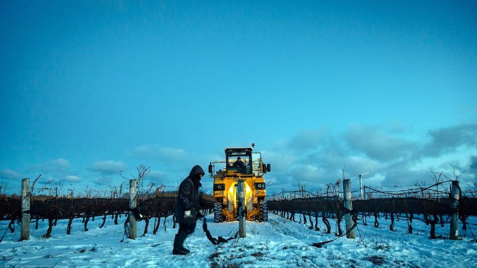 Un homme marche dans un champ de vignes enneigé. Une grosse machine circule dans le champ derrière l'homme.