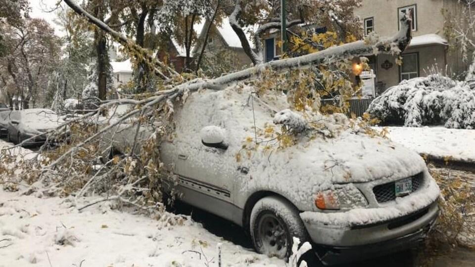 Une voiture écrasée sous le poids d'une branche cassée dans une rue de Winnipeg.