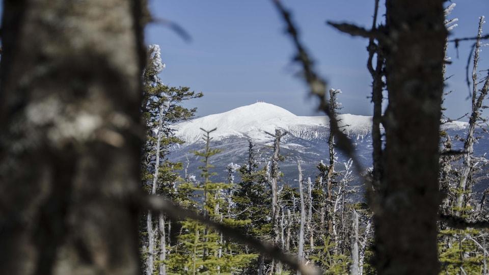 Vue sur le mont Washington enneigé à travers les arbres