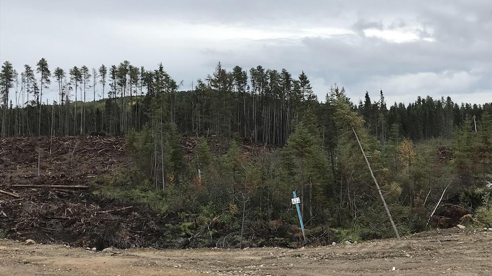 Une coupe forestière au kilomètre 63 du chemin forestier ro-461(25) qui relie Wemotaci et La Tuque.