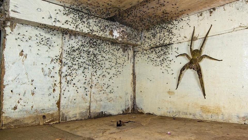 La photographie de Gil Wizen montre une araignée et ses petits sous un lit.