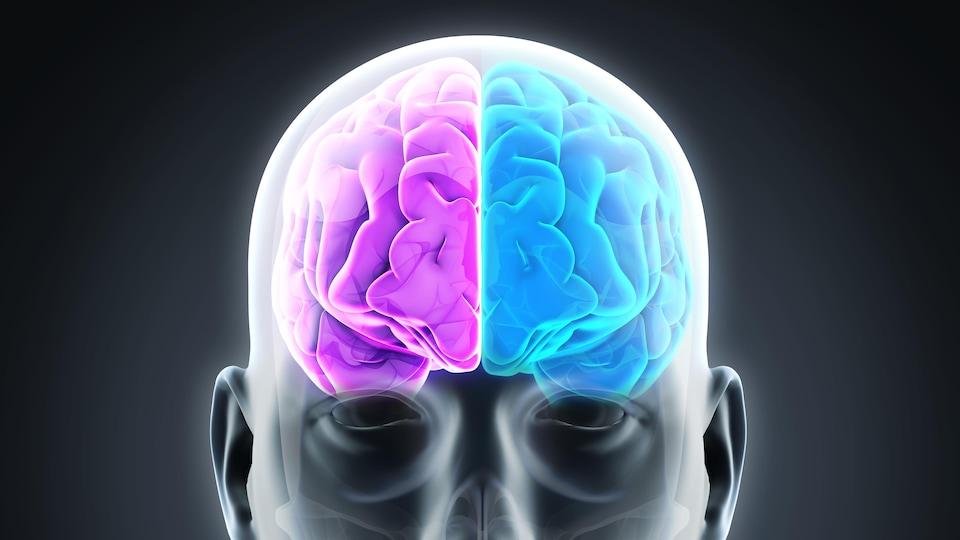 Une image d'un corps avec deux hémisphères du cerveau mis en évidence par le rose et le bleu.
